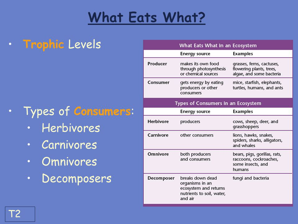What Eats What? Trophic Levels Types of Consumers: Herbivores Carnivores Omnivores Decomposers T2