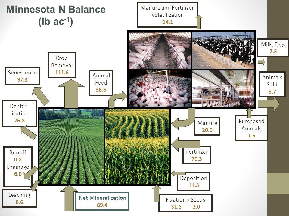 Leaching 8.6 Manure 20.0 Fertilizer 70.3 Deposition 11.3 Runoff 0.8 Drainage 6.0 Crop Removal 111.6 Animal Feed 38.6 Milk, Eggs 2.5 Animals Sold 5.7 Net Mineralization 89.4 Fixation + Seeds 31.6 2.0 Denitri- fication 26.8 Senescence 37.3 Manure and Fertilizer Volatilization 14.1 Minnesota N Balance (lb ac -1 ) Purchased Animals 1.6