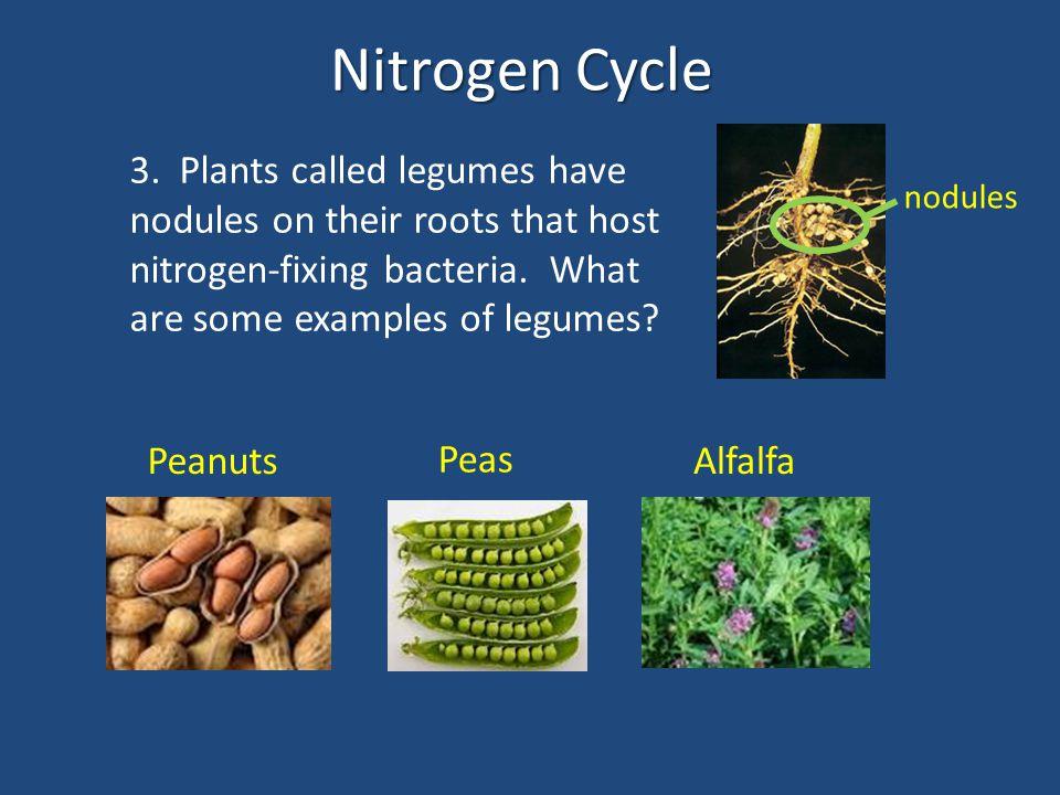 Nitrogen Cycle Ammoniuim (NH 4 + ) 14.16. 15. 17.