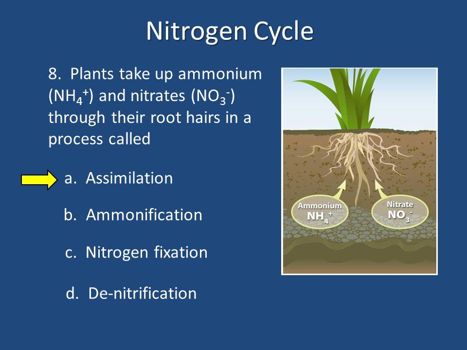 Nitrogen Cycle 9.
