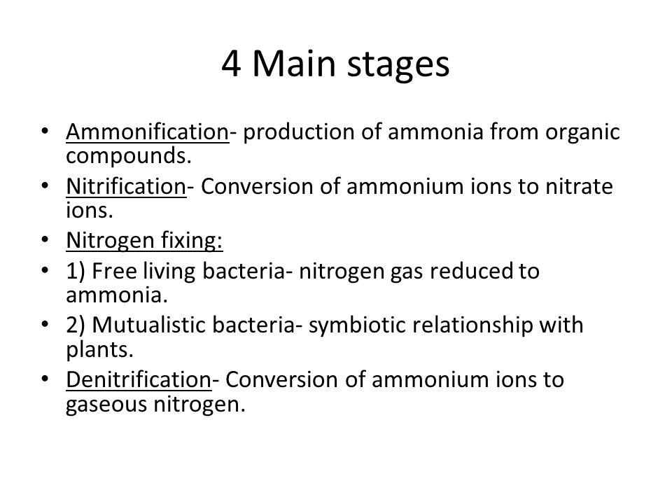 4 Main stages Ammonification- production of ammonia from organic compounds.