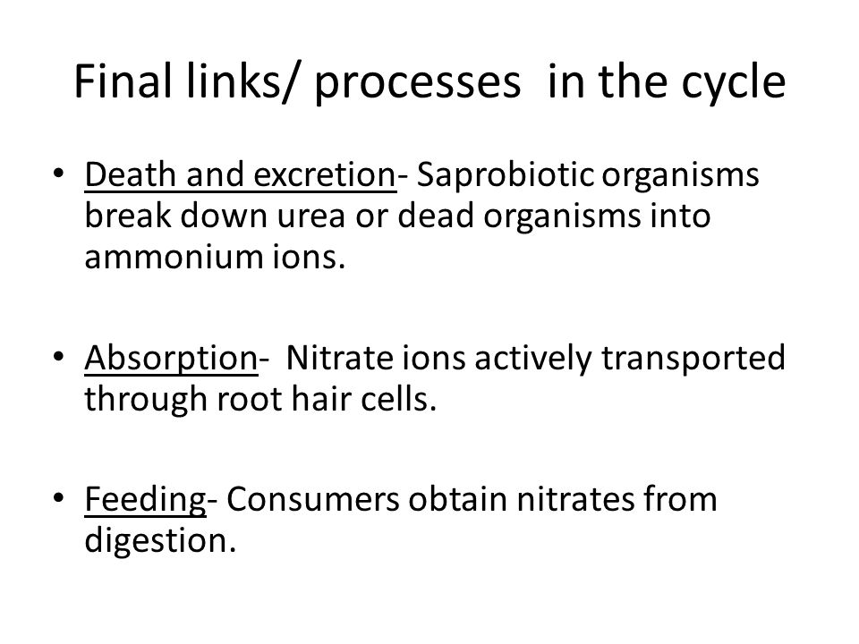 Final links/ processes in the cycle Death and excretion- Saprobiotic organisms break down urea or dead organisms into ammonium ions.