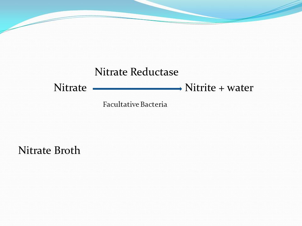 Nitrate Reductase Nitrate Nitrite + water Facultative Bacteria Nitrate Broth