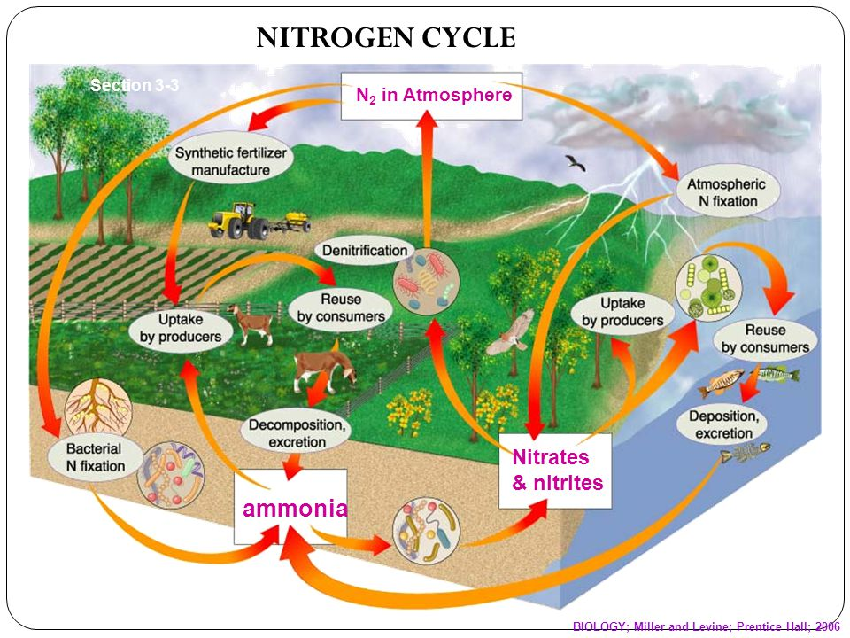 WHY IS NITROGEN IMPORTANT.