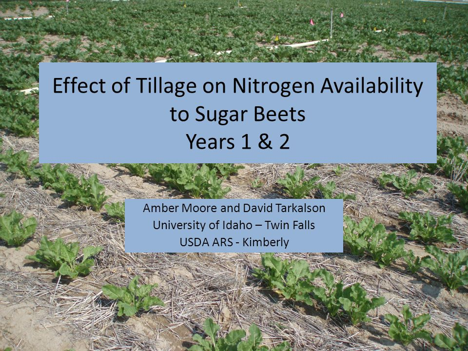 Introduction Introduction of Round-up Ready sugar beets – Weeds no longer controlled by cultivation Opportunities for conservation tillage methods, such as strip-till – No-till meets moldboard plow – Only disturbs portion of the soil that contains the seed.