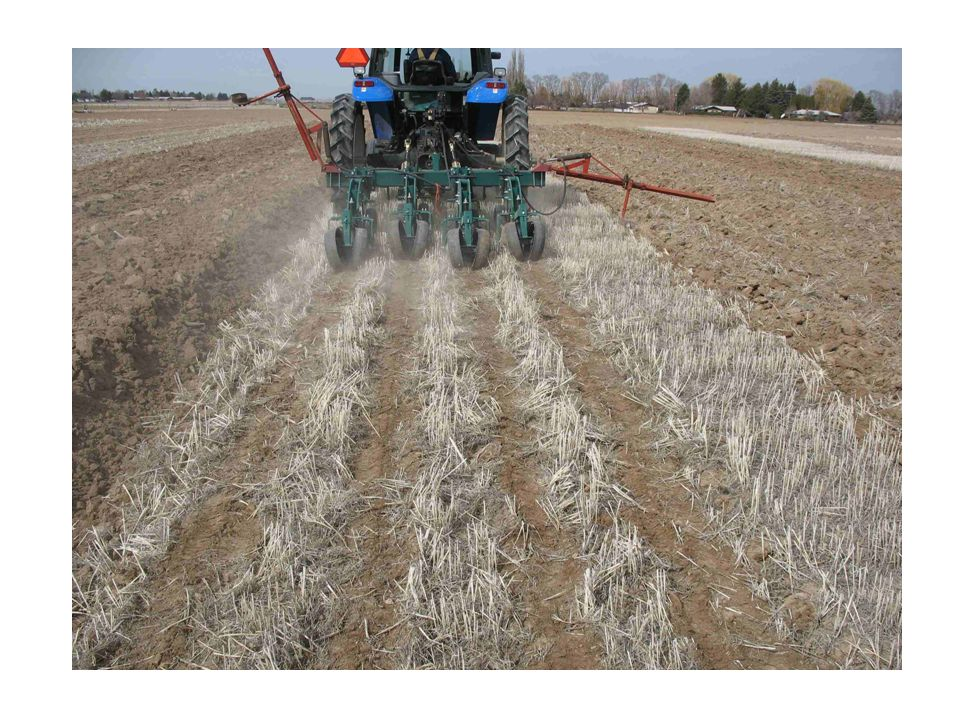 YearTillageBedding UAN application rate (lbs N/acre) 050100150200 ----------lbs plant available N/acre--------------- 2008 Strip tillage Fall79.0 ab102.7 ab101.9 bc154.7186.3 Spring91.7 a 81.0 b121.5 ab179.7188.8 Chisel Plow Fall 66.2 ab96.6 ab156.8 a143.8164.7 Spring 59.7 b 88.0 ab115.7 abc146.2169.6 Moldboard Plow Fall 77.2 ab143.5 a138.8 ab171.7214.9 Spring 63.1 b 69.4 b 77.3 c119.2108.8 P>0.05/LSD26.957.4 44.1 NS 2009