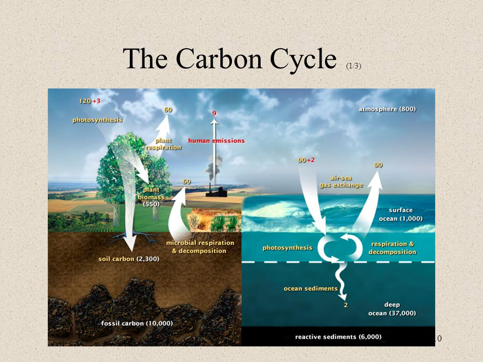 10 The Carbon Cycle (1/3)