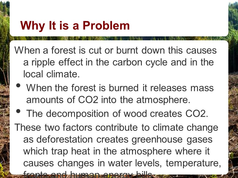 Why It is a Problem When a forest is cut or burnt down this causes a ripple effect in the carbon cycle and in the local climate. When the forest is bu