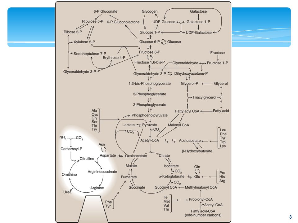 Figure 19.3 The ubiquitin- proteasome degradation pathway of proteins. 14