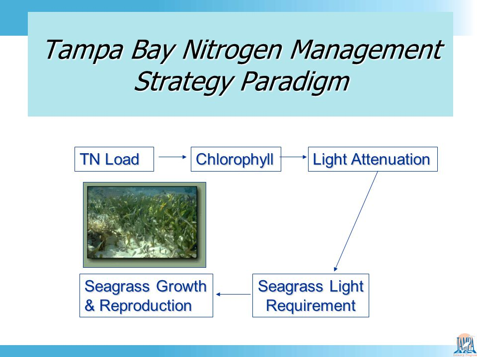 TN Load Chlorophyll Light Attenuation Seagrass Growth & Reproduction Seagrass Light Requirement Tampa Bay Nitrogen Management Strategy Paradigm