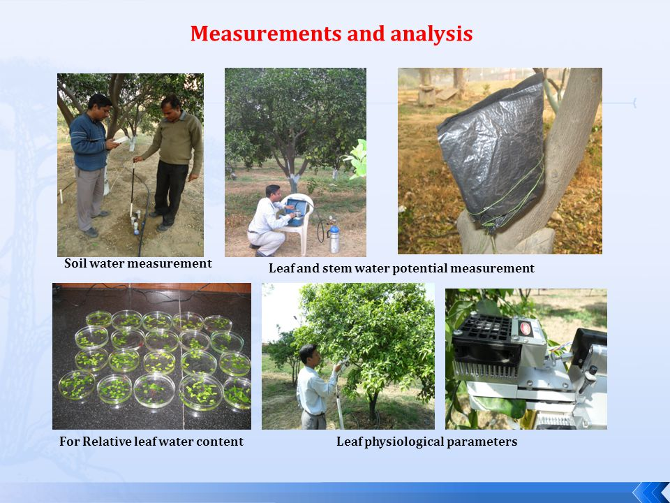 Canopy reflectance Root sampling and analysis
