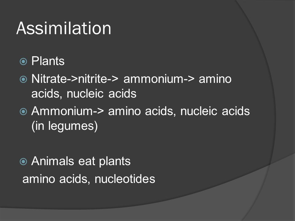 Assimilation  Plants  Nitrate->nitrite-> ammonium-> amino acids, nucleic acids  Ammonium-> amino acids, nucleic acids (in legumes)  Animals eat pl