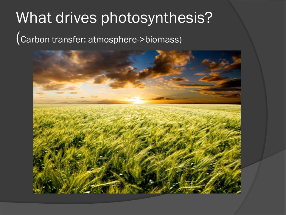 What drives photosynthesis? ( Carbon transfer: atmosphere->biomass)