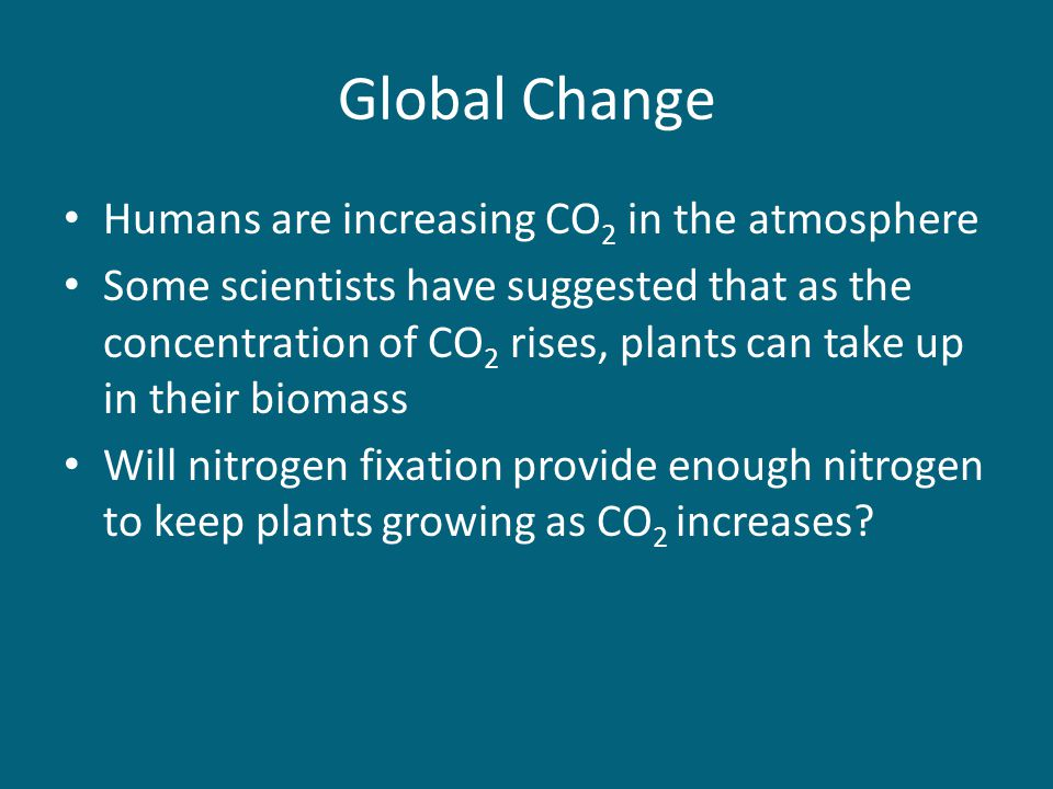 Global Change Humans are increasing CO 2 in the atmosphere Some scientists have suggested that as the concentration of CO 2 rises, plants can take up in their biomass Will nitrogen fixation provide enough nitrogen to keep plants growing as CO 2 increases