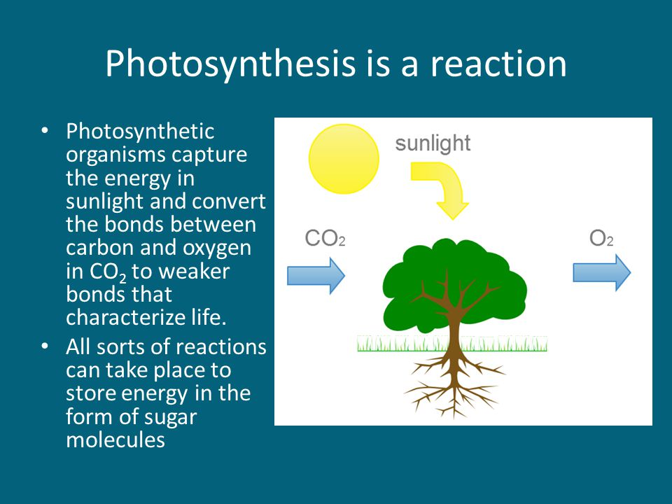 Photosynthesis is a reaction Photosynthetic organisms capture the energy in sunlight and convert the bonds between carbon and oxygen in CO 2 to weaker bonds that characterize life.