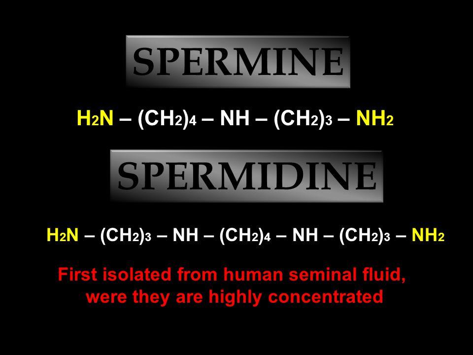 EXAMPLES CH 3 – NH – CH 3 dimethylamine CH 3 – CH 2 – NH – CH 3 ethylmethylamine