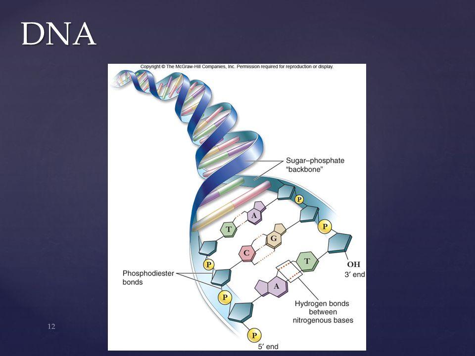 12 DNA