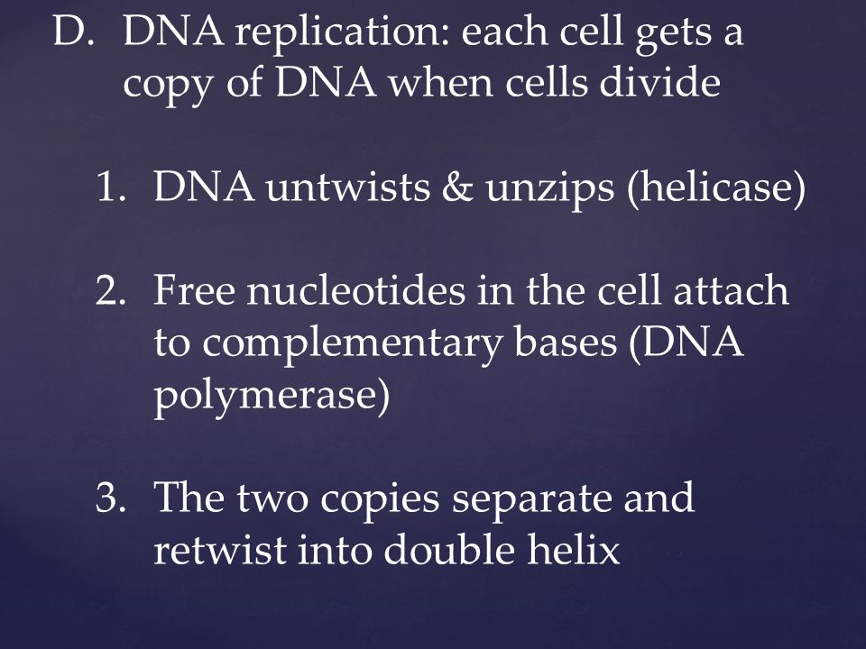 D.DNA replication: each cell gets a copy of DNA when cells divide 1.DNA untwists & unzips (helicase) 2.Free nucleotides in the cell attach to complementary bases (DNA polymerase) 3.The two copies separate and retwist into double helix