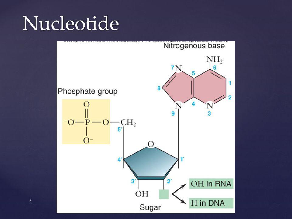 6 Nucleotide