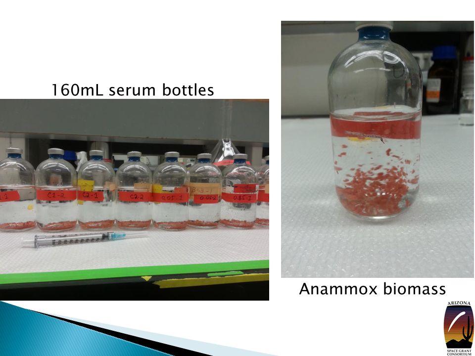160mL serum bottles Anammox biomass