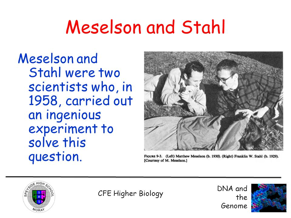 CFE Higher Biology DNA and the Genome Meselson and Stahl Meselson and Stahl were two scientists who, in 1958, carried out an ingenious experiment to s