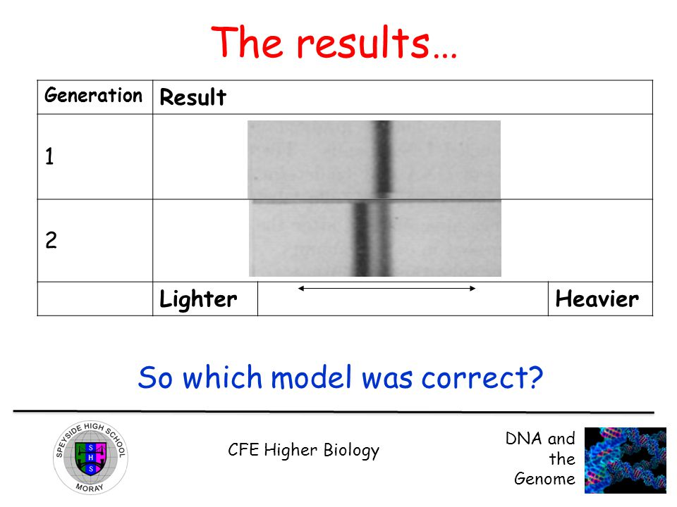 CFE Higher Biology DNA and the Genome The results… Generation Result 1 2 LighterHeavier So which model was correct