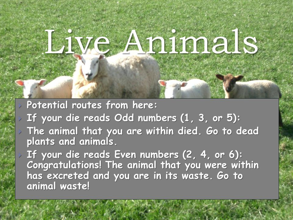 Live Animals  Potential routes from here:  If your die reads Odd numbers (1, 3, or 5):  The animal that you are within died.