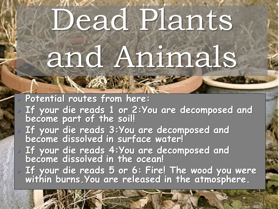 Dead Plants and Animals  Potential routes from here:  If your die reads 1 or 2:You are decomposed and become part of the soil.