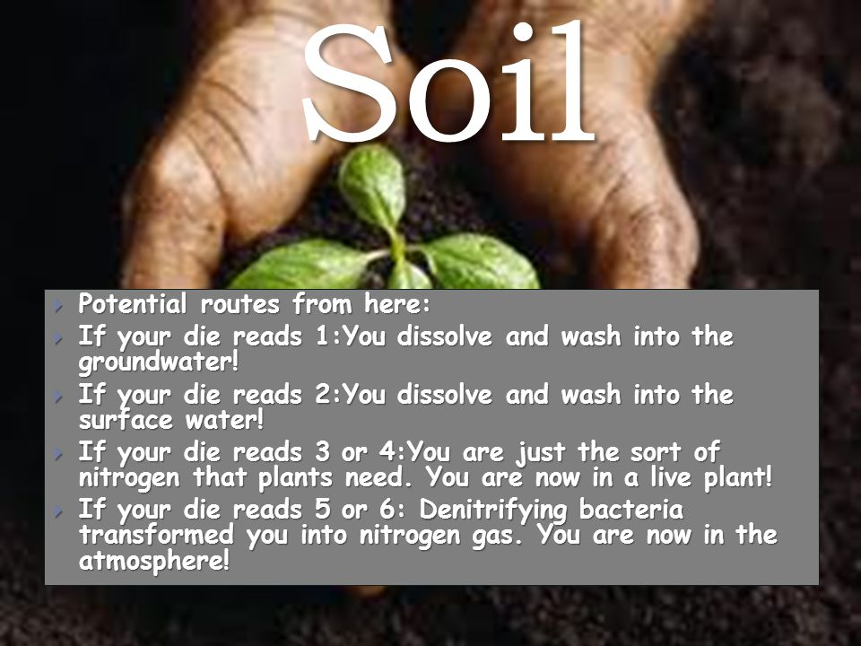Soil  Potential routes from here:  If your die reads 1:You dissolve and wash into the groundwater.
