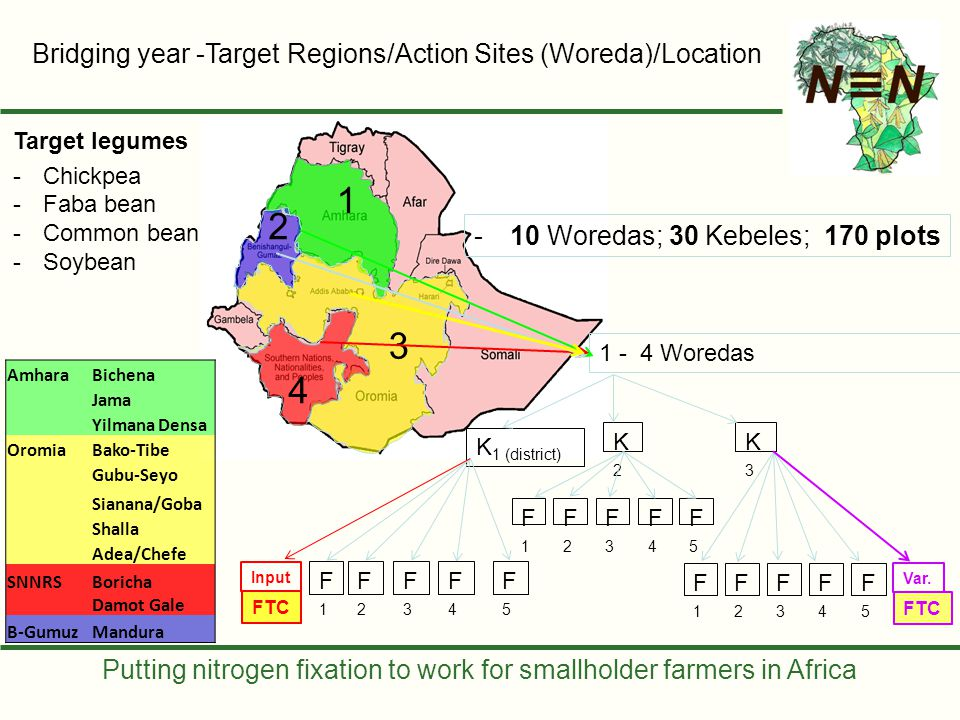 Putting nitrogen fixation to work for smallholder farmers in Africa Activity ClusterDiagnosisResearcher Managed AgronomyDemonstrationAdaptation Site selection Priority legumes, priority areas; Representative range of soil types.