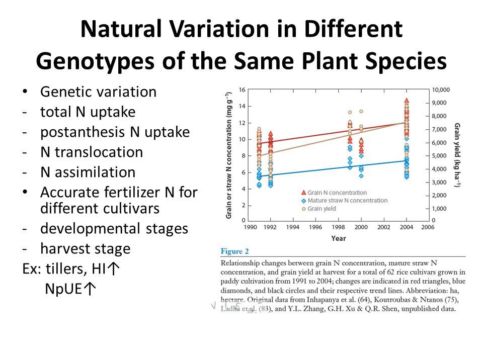 Natural Variation in Different Genotypes of the Same Plant Species Genetic variation -total N uptake -postanthesis N uptake -N translocation -N assimi