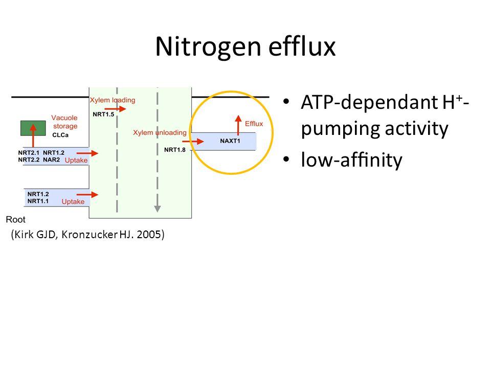 ATP-dependant H + - pumping activity low-affinity (Kirk GJD, Kronzucker HJ. 2005) Nitrogen efflux