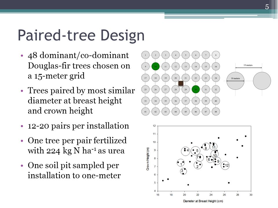 Paired-tree Design 48 dominant/co-dominant Douglas-fir trees chosen on a 15-meter grid Trees paired by most similar diameter at breast height and crow
