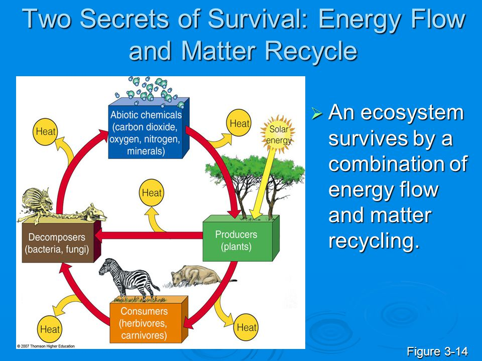 Two Secrets of Survival: Energy Flow and Matter Recycle  An ecosystem survives by a combination of energy flow and matter recycling. Figure 3-14