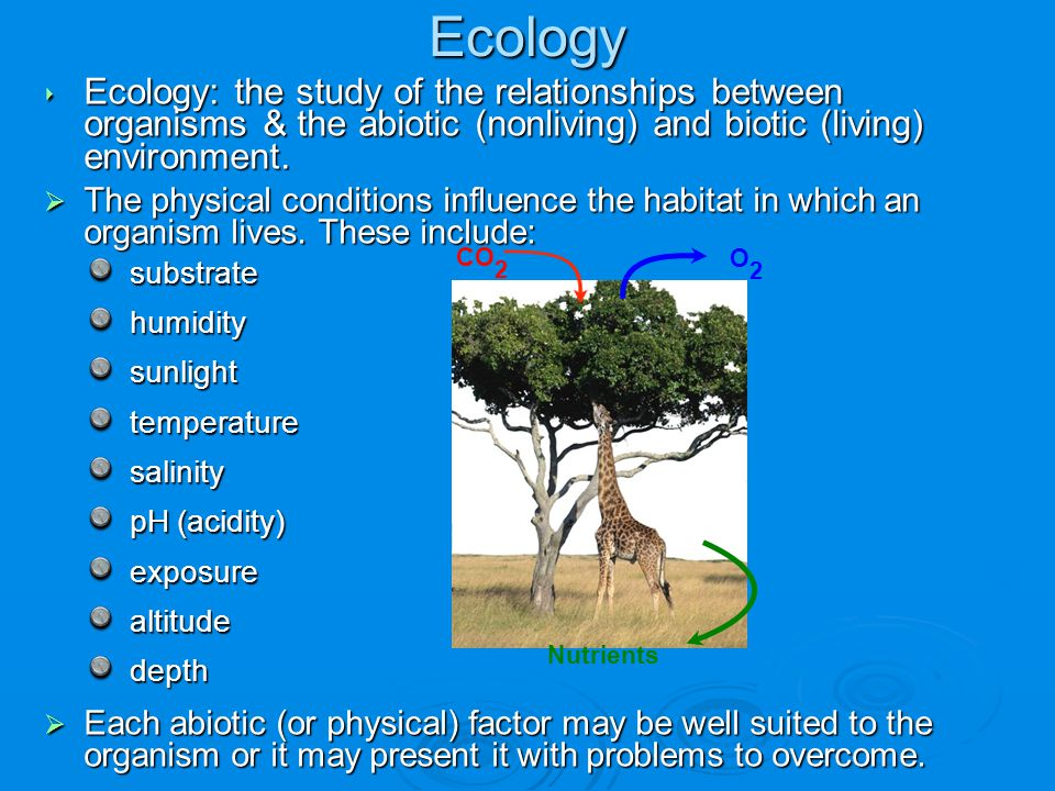 Ecology ‣ Ecology: the study of the relationships between organisms & the abiotic (nonliving) and biotic (living) environment.  The physical conditio