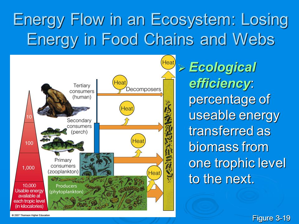 Energy Flow in an Ecosystem: Losing Energy in Food Chains and Webs  Ecological efficiency: percentage of useable energy transferred as biomass from o