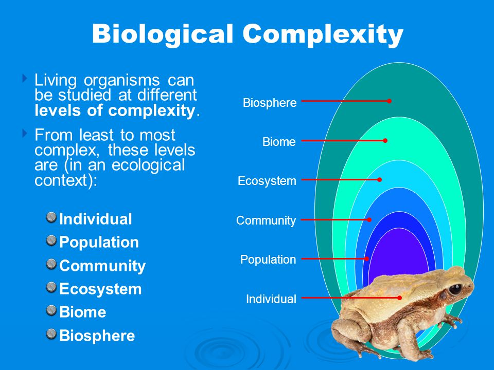 ‣ Living organisms can be studied at different levels of complexity. ‣ From least to most complex, these levels are (in an ecological context): Indivi