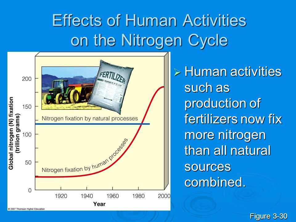 Effects of Human Activities on the Nitrogen Cycle  Human activities such as production of fertilizers now fix more nitrogen than all natural sources