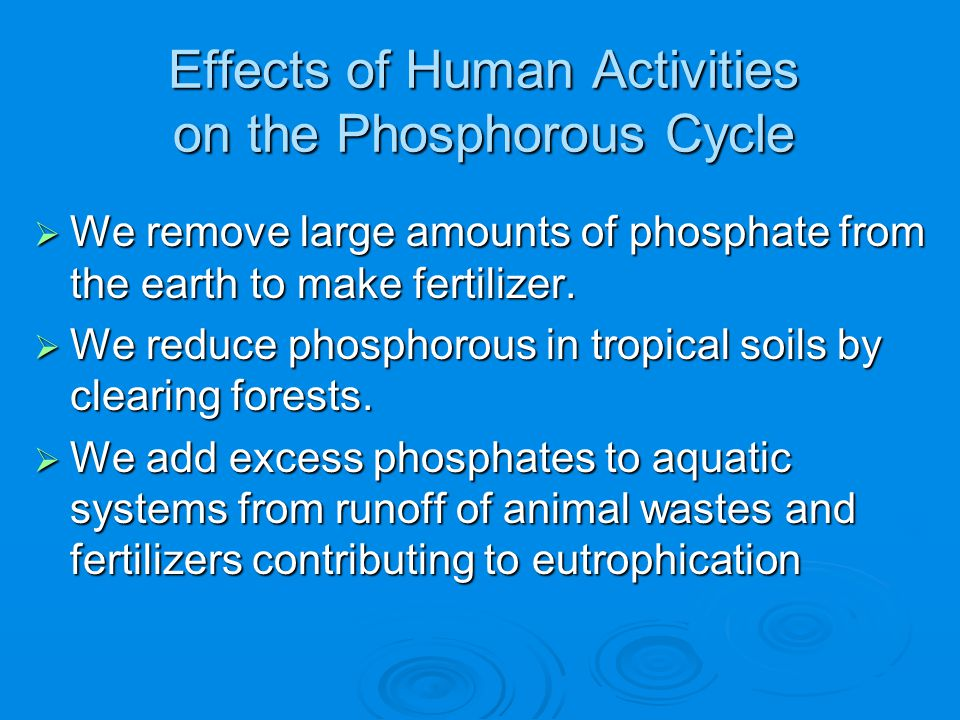 Effects of Human Activities on the Phosphorous Cycle  We remove large amounts of phosphate from the earth to make fertilizer.  We reduce phosphorous