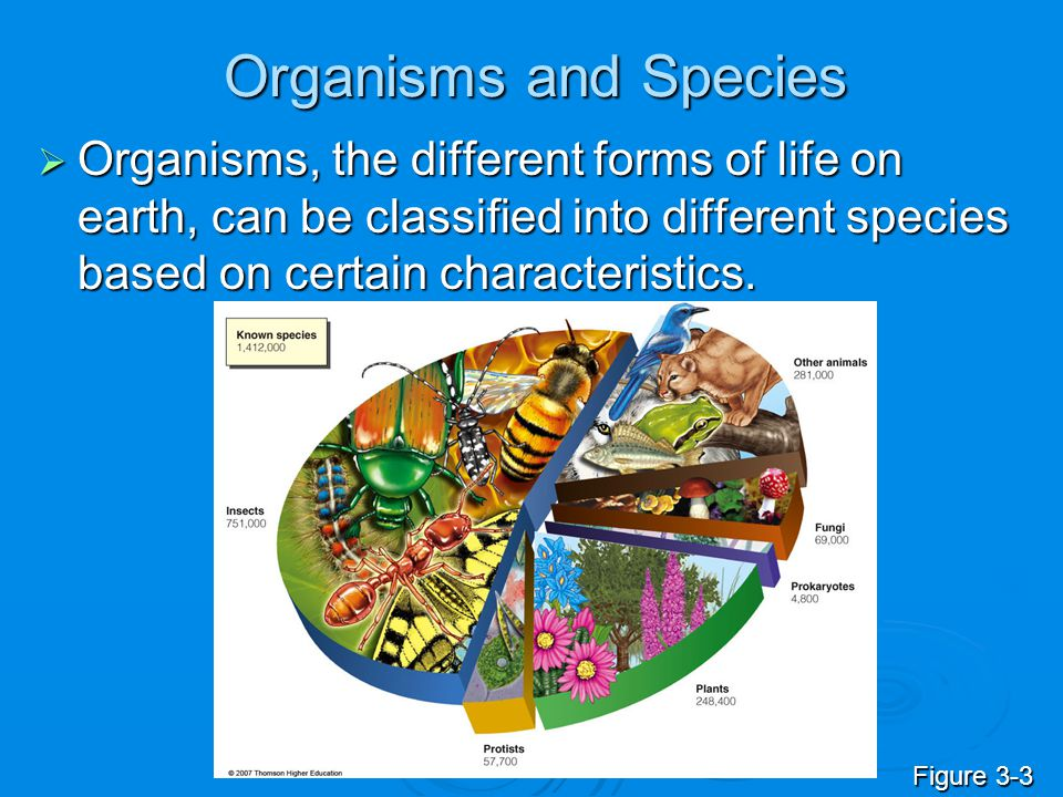 Organisms and Species  Organisms, the different forms of life on earth, can be classified into different species based on certain characteristics. Fi