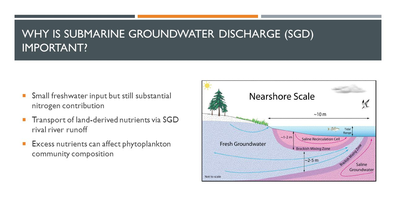 WHY IS SUBMARINE GROUNDWATER DISCHARGE (SGD) IMPORTANT?  Small freshwater input but still substantial nitrogen contribution  Transport of land-deriv