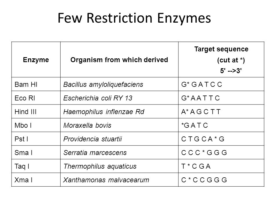 Type II restriction endonucleases recognize specific sites and cut the DNA at the recognized sites.