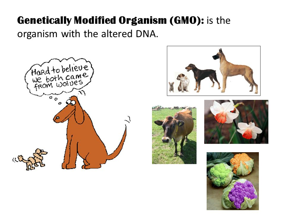 Genetically Modified Organism (GMO): is the organism with the altered DNA.