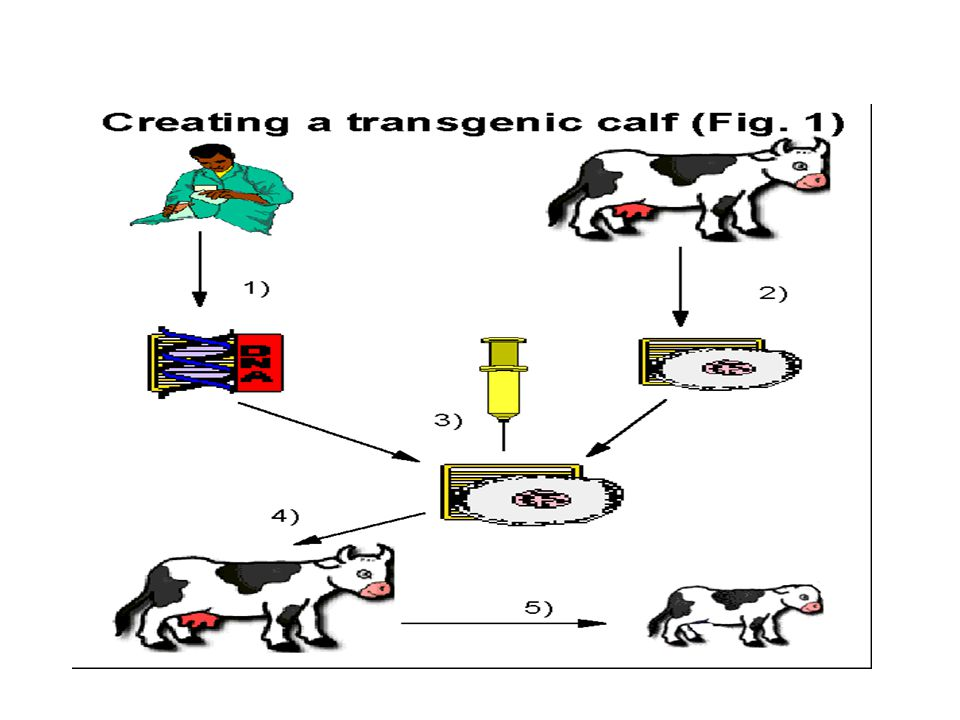 Uses Restriction enzymes are used to cut a source DNA into small frangments for clonning.
