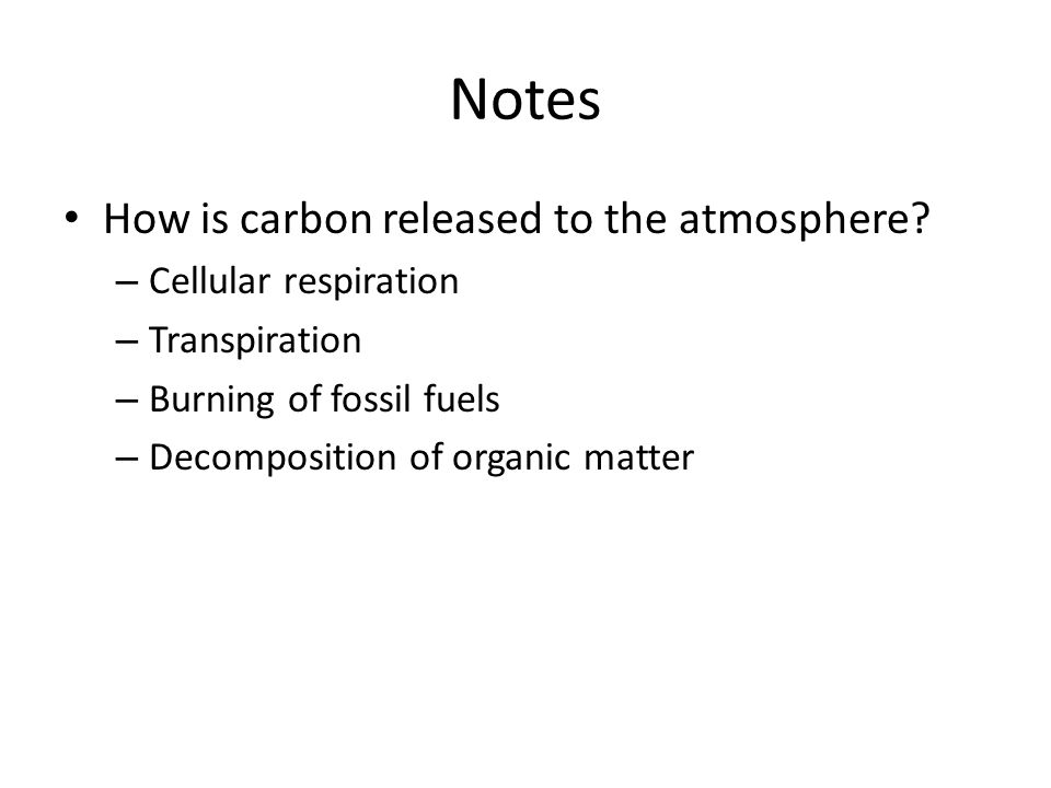 Notes How is carbon released to the atmosphere? – Cellular respiration – Transpiration – Burning of fossil fuels – Decomposition of organic matter