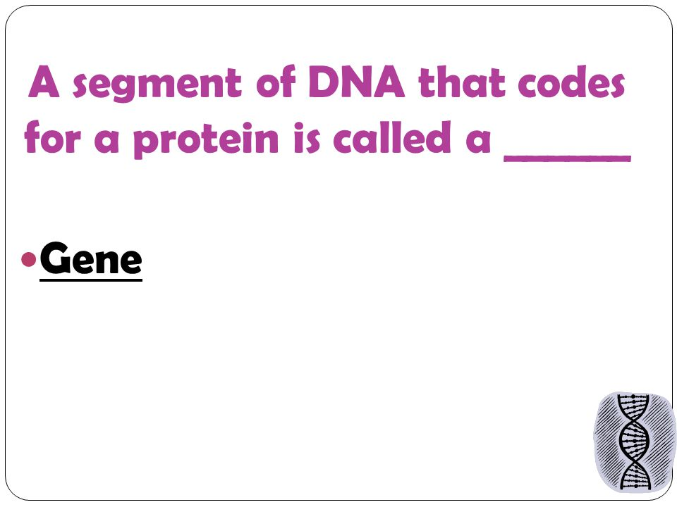 A segment of DNA that codes for a protein is called a ______ Gene