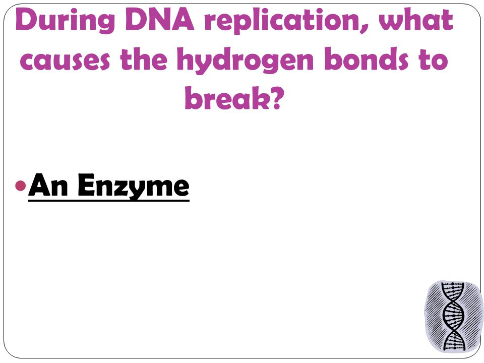 During DNA replication, what causes the hydrogen bonds to break An Enzyme