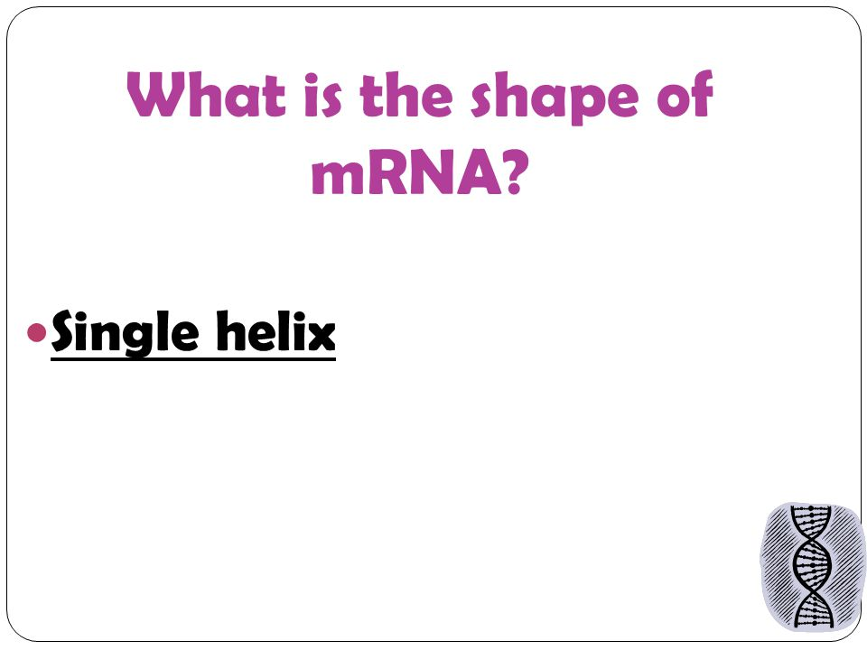 What is the shape of mRNA Single helix