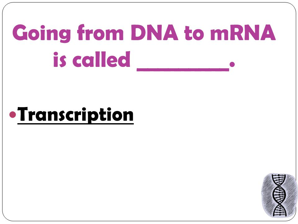 Going from DNA to mRNA is called _________. Transcription