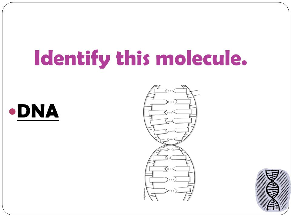 Identify this molecule. DNA